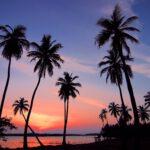 Kamerplant palm : verzorgingstips en aanbevolen soorten